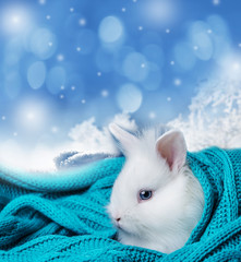 little cute white rabbit in a soft scarf