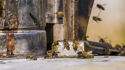 Bees Chasing Stranger