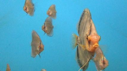 水族館の魚達_8