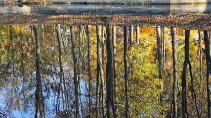 lake which reflects beautiful autumn woods in city park
