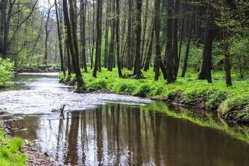 Valley of creek Rakovnicky potok
