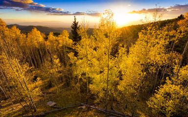 Golden Aspen Sunset