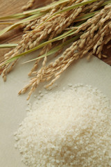 稲穂と白米