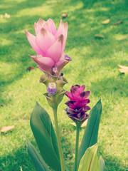 flower in garden with retro filter effect