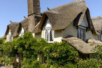 vine and straw roof at Porlock, Somerset