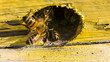 Bees Extrude Alien Our Of Hive
