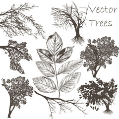 Collection of vector detailed trees for design