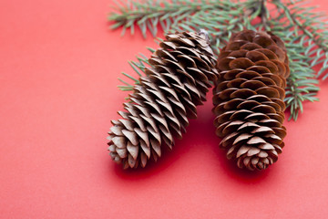 Two pine cones with branch on red background