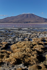 Laguna Colorada in Uyuni