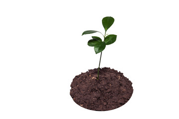 leaf of plant