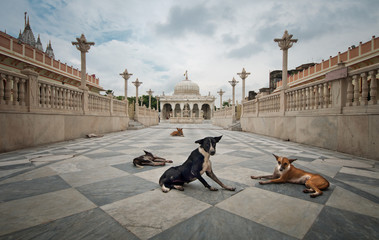 Dog guards at temple entrance