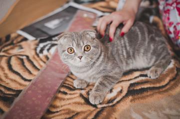 Fluffy cat 1121.
