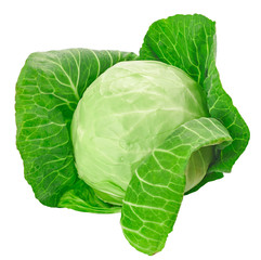 Green cabbage isolated on white background