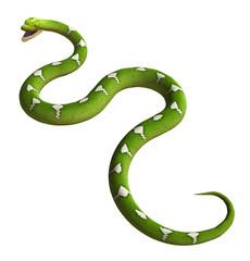 serpente su sfondo bianco