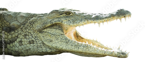 Deurstickers Krokodil crocodile with open mouth
