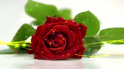 wedding loop background, red rose and particle element