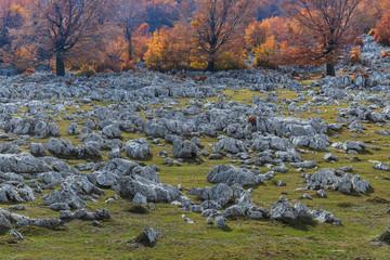 Mehedinti Mountains