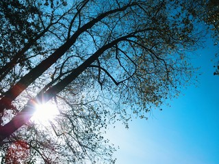 Sun shining through trees on blue sky background