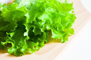 green salad lettuce