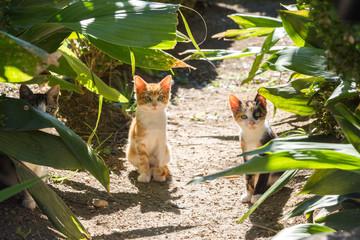 Chatons à l'arboretum de Trestno