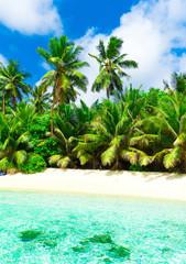 Grove Foliage Coconut