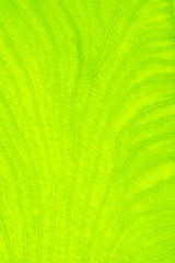 beautiful close up plant texture background