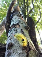 Un bruco colorato nel bosco
