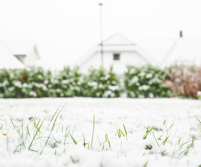 Fresh snow cover over green grass on lawn