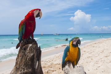 pappagallo 16
