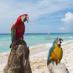 pappagallo 15