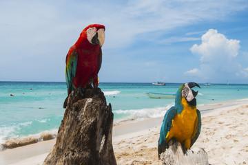 pappagallo 14