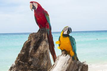 pappagallo 13