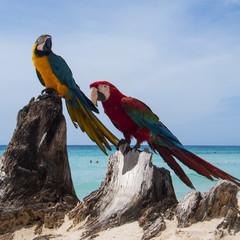 pappagallo 12