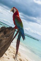 pappagallo 10