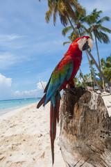 pappagallo 8