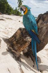 pappagallo 6