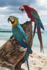 pappagallo 5