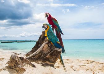 pappagallo 4
