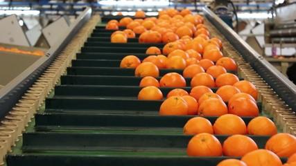 portakal orange