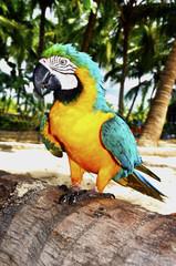 pappagallo 3