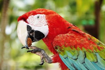 pappagallo 2