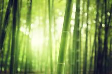 "Постер, картина, фотообои ""Bamboo Forest"""