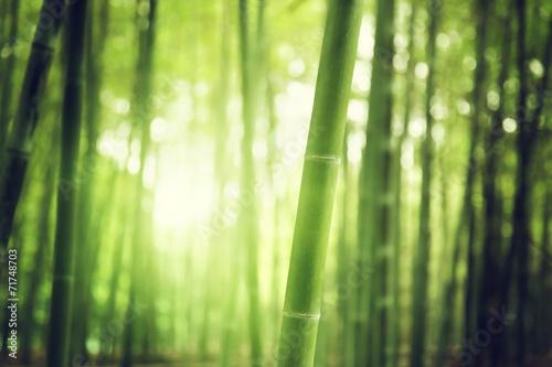 Aluminium Bossen Bamboo Forest
