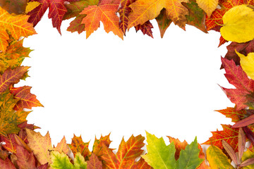 Background frame isolated colorful autumn leaves wedding party i