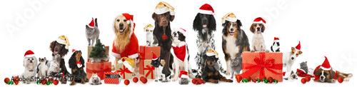 Staande foto Hond Weihnachtstiere