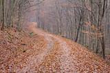 way in autumn forest