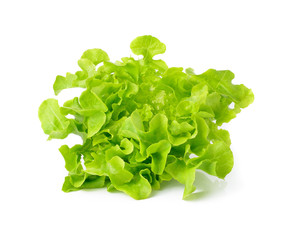 Fresh green Lettuce salad isolated on white
