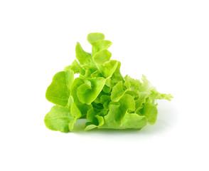 fresh green lettuce leaves isolated on white