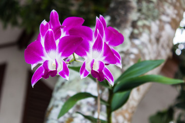 purple beautiful orchid
