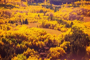 Colorful Fall Forest Scenery